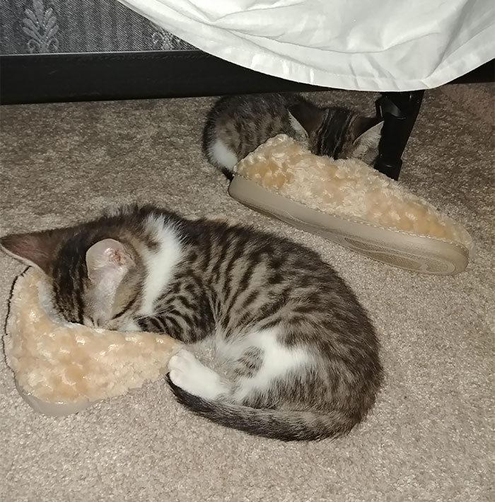 42 gatos que preferem dormir em qualquer outro lugar do que em suas camas 40