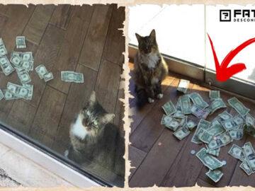 Gato surgia com muito dinheiro todos os dias, todos ficaram chocados quando descobriram de onde veio 47
