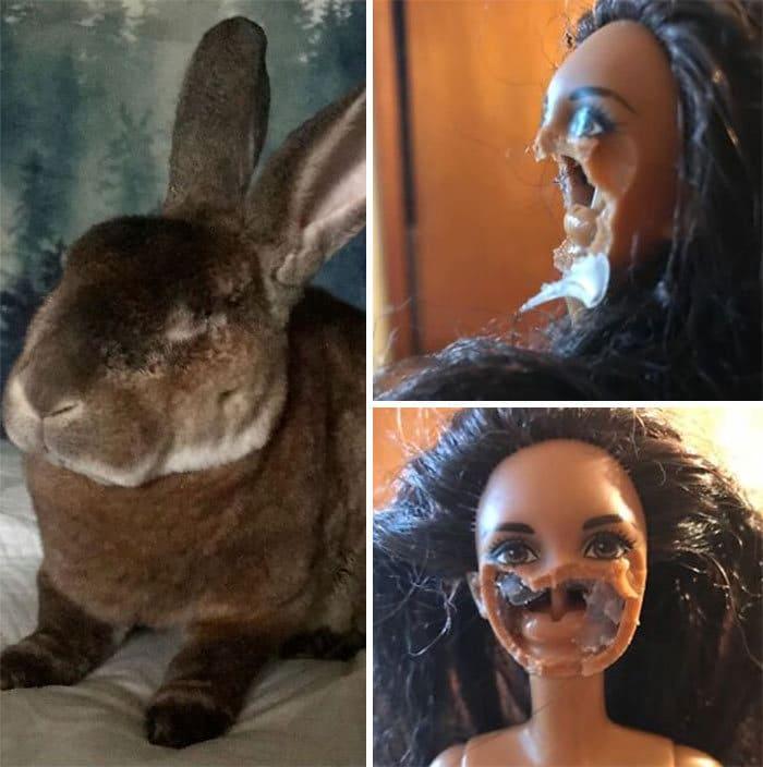 Há um grupo no Facebook onde os membros estão envergonhando seus animais de estimação 7
