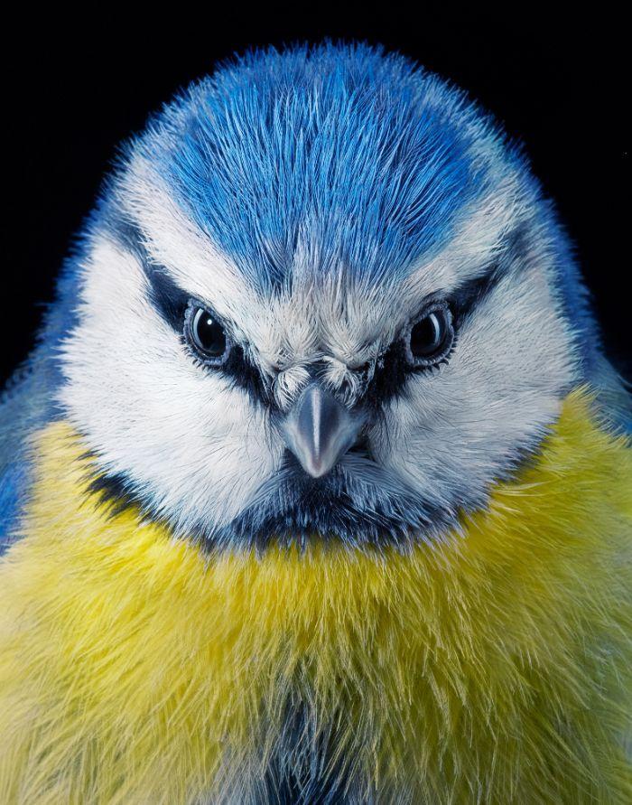 O fotógrafo tira retratos de pássaros e os resultados são sublimes 3