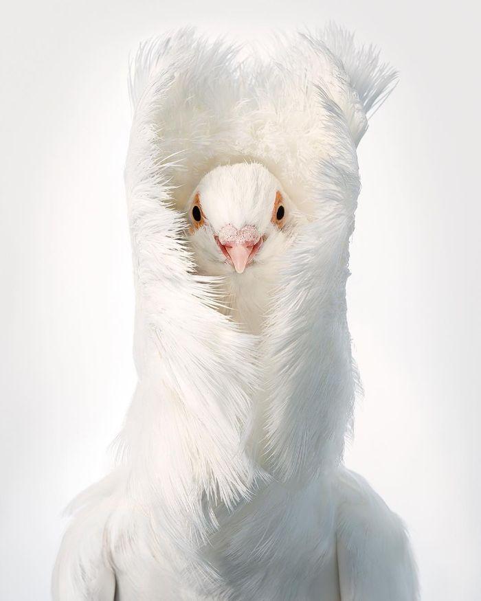 O fotógrafo tira retratos de pássaros e os resultados são sublimes 4