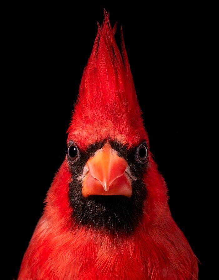 O fotógrafo tira retratos de pássaros e os resultados são sublimes 6