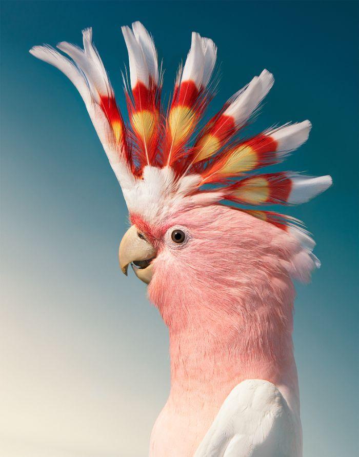 O fotógrafo tira retratos de pássaros e os resultados são sublimes 7