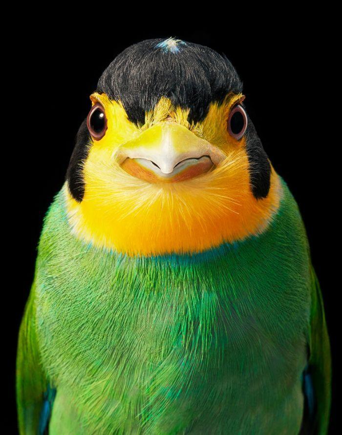 O fotógrafo tira retratos de pássaros e os resultados são sublimes 10