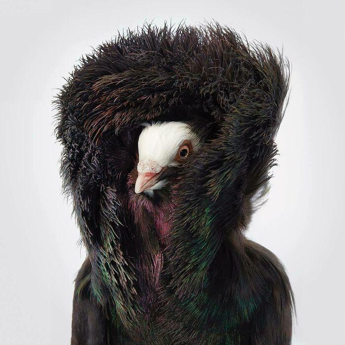O fotógrafo tira retratos de pássaros e os resultados são sublimes 11