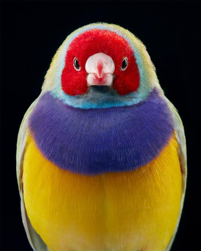 O fotógrafo tira retratos de pássaros e os resultados são sublimes 12