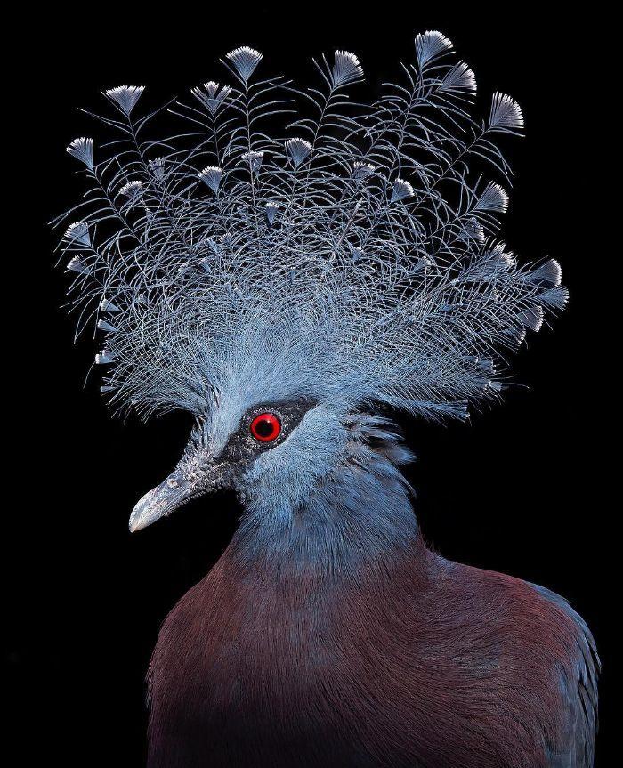 O fotógrafo tira retratos de pássaros e os resultados são sublimes 13