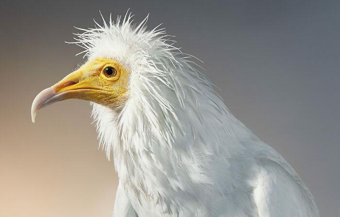 O fotógrafo tira retratos de pássaros e os resultados são sublimes 14