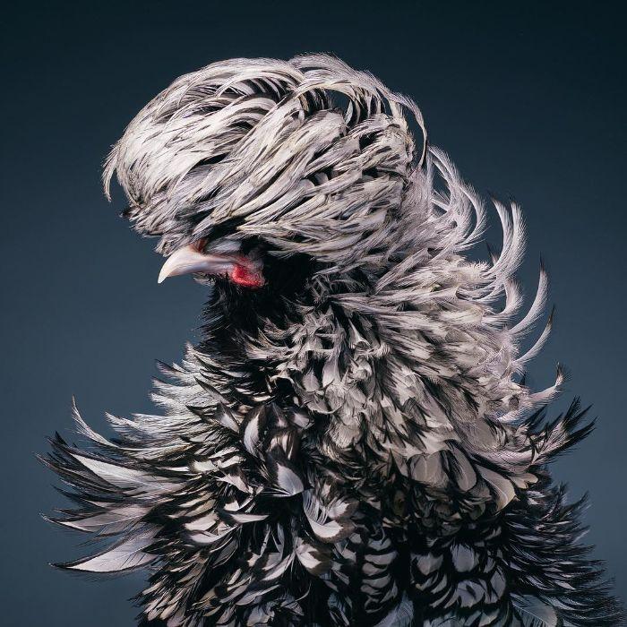 O fotógrafo tira retratos de pássaros e os resultados são sublimes 17