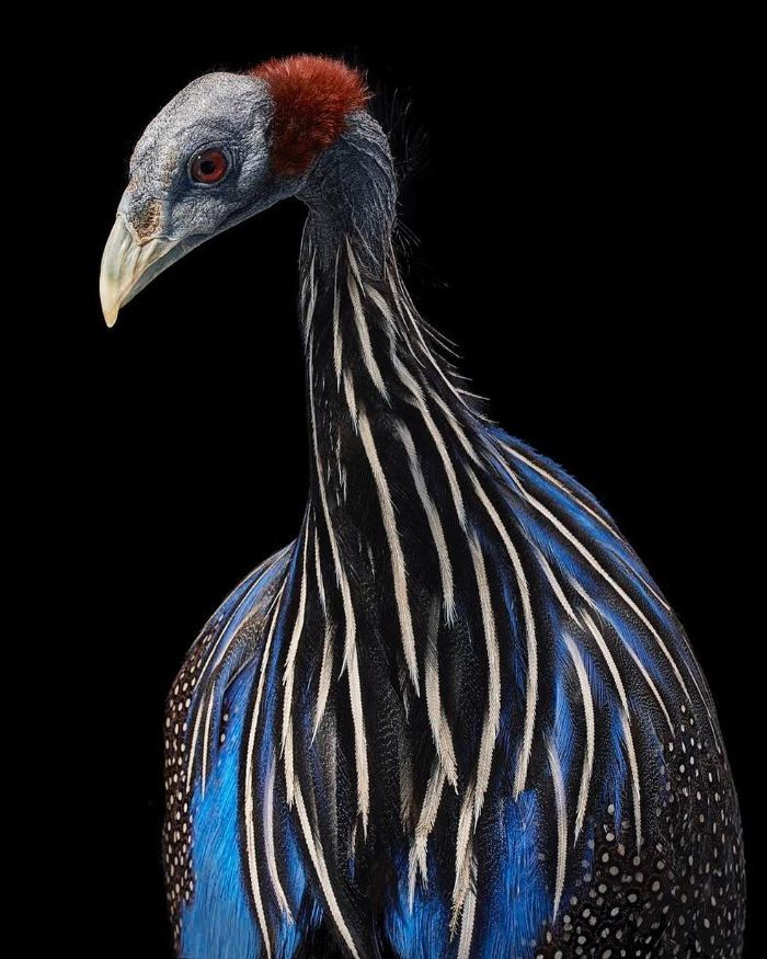 O fotógrafo tira retratos de pássaros e os resultados são sublimes 18