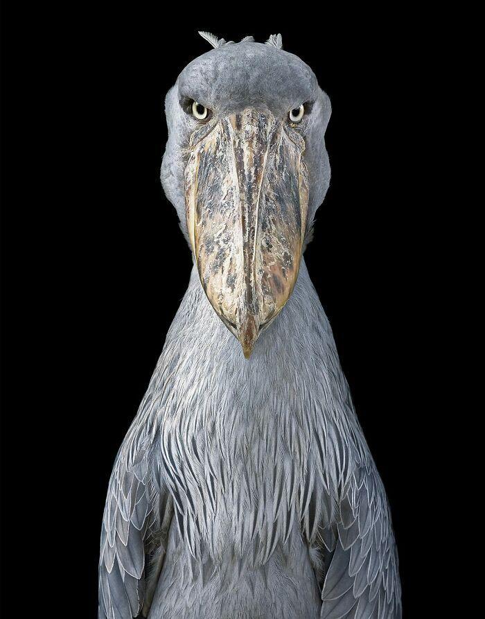 O fotógrafo tira retratos de pássaros e os resultados são sublimes 19