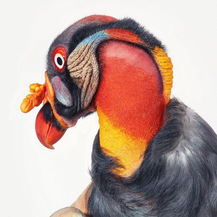 O fotógrafo tira retratos de pássaros e os resultados são sublimes 20