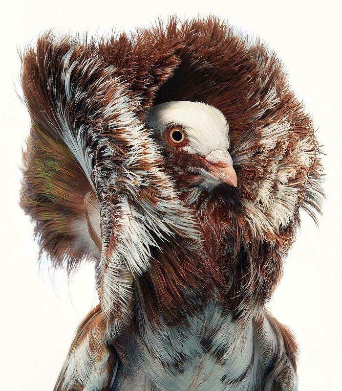 O fotógrafo tira retratos de pássaros e os resultados são sublimes 21