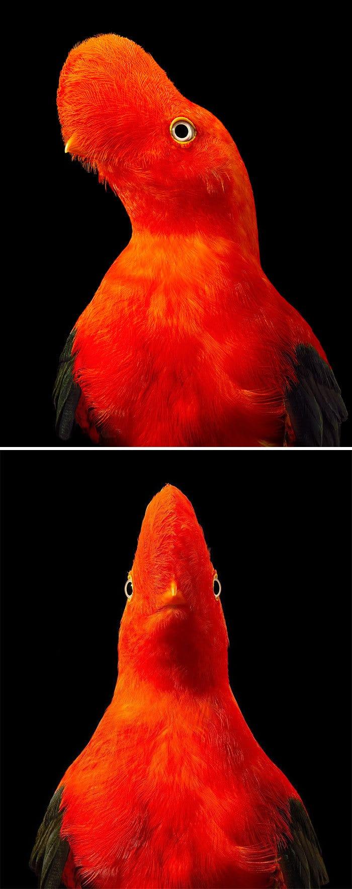 O fotógrafo tira retratos de pássaros e os resultados são sublimes 22