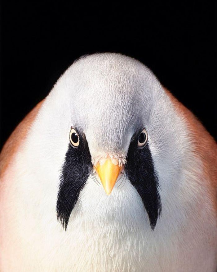 O fotógrafo tira retratos de pássaros e os resultados são sublimes 23