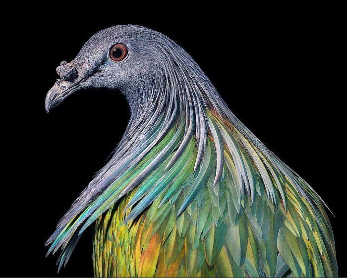 O fotógrafo tira retratos de pássaros e os resultados são sublimes 24