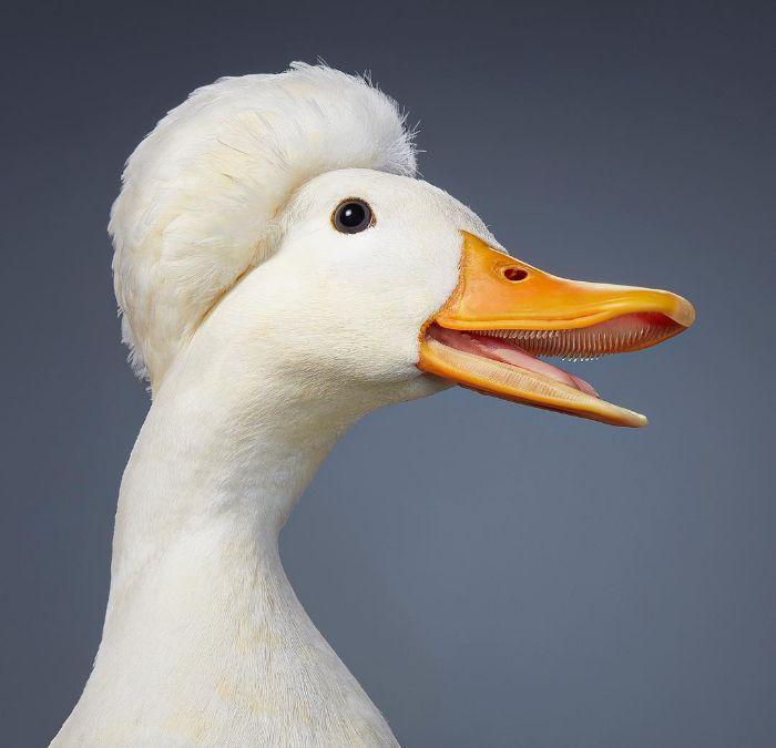 O fotógrafo tira retratos de pássaros e os resultados são sublimes 25