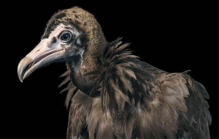 O fotógrafo tira retratos de pássaros e os resultados são sublimes 26