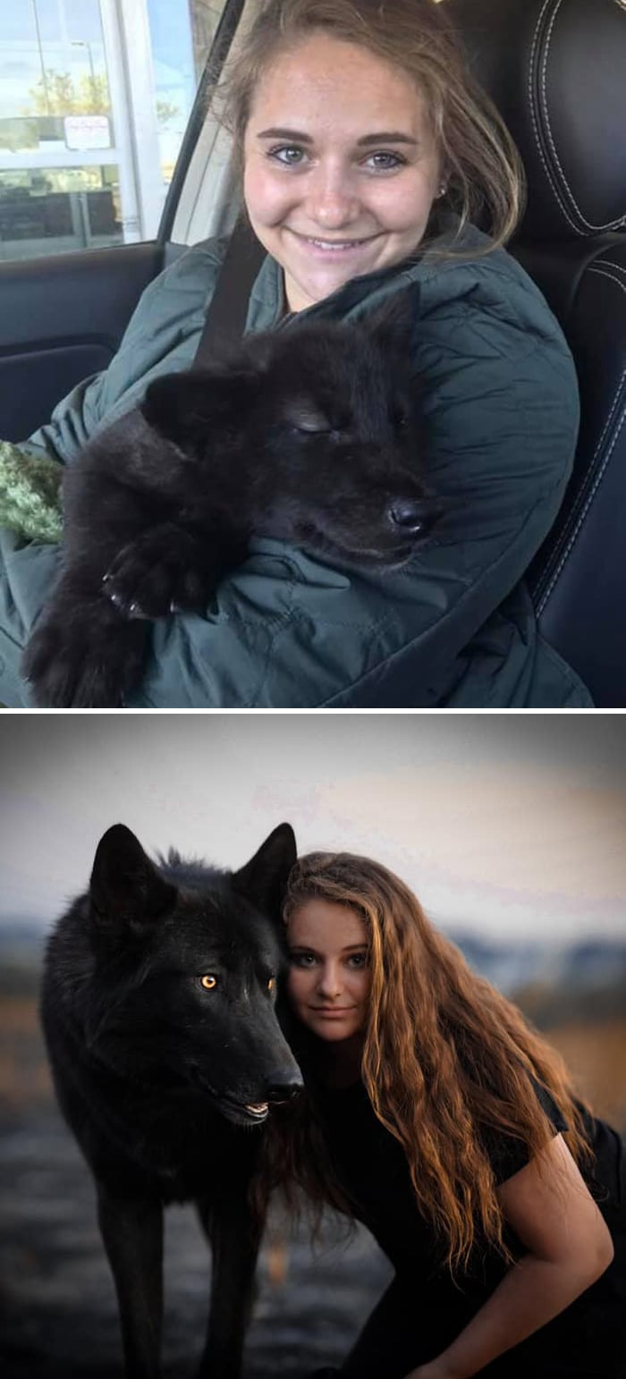 As pessoas estão compartilhando fotos lado a lado com seus animais para o Desafio de antes e agora 2