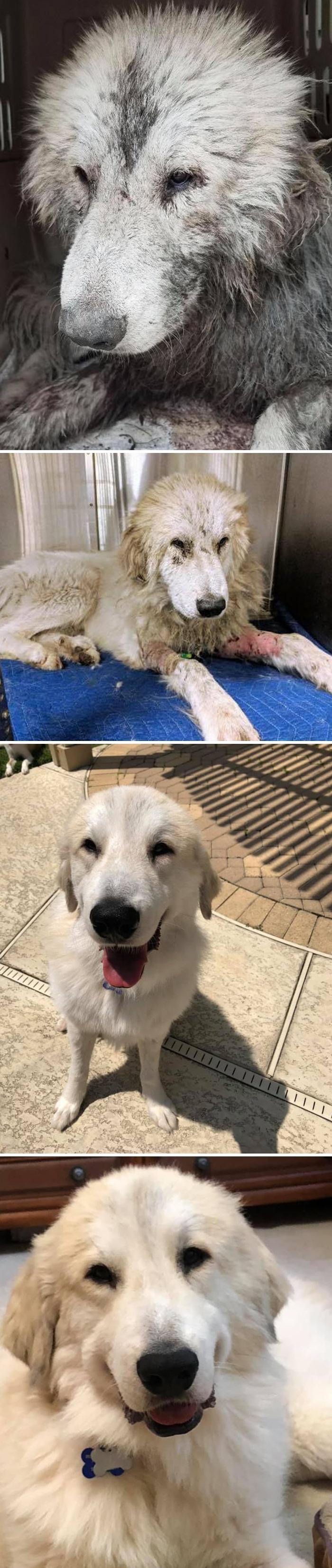As pessoas estão compartilhando fotos lado a lado com seus animais para o Desafio de antes e agora 3