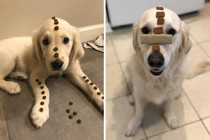 As pessoas estão compartilhando fotos lado a lado com seus animais para o Desafio de antes e agora 12