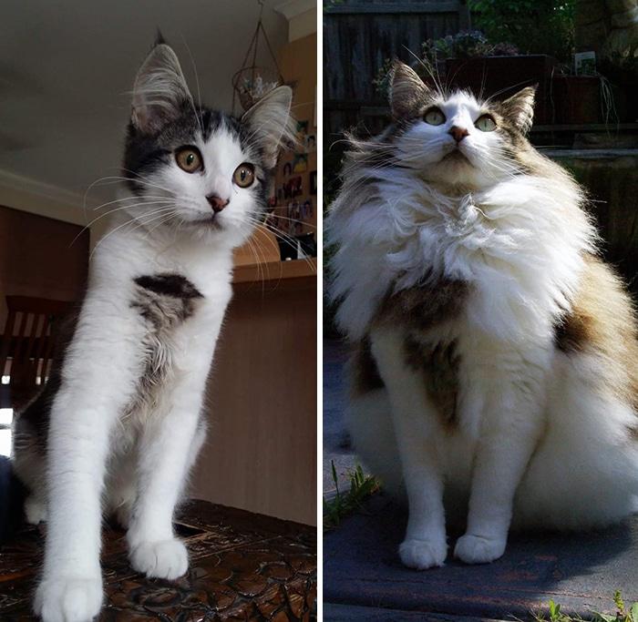 As pessoas estão compartilhando fotos lado a lado com seus animais para o Desafio de antes e agora 14