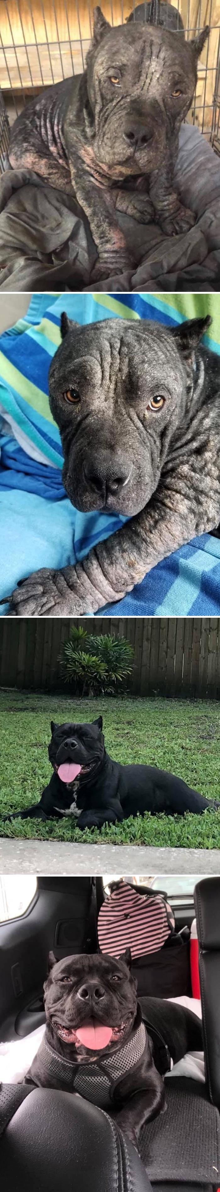 As pessoas estão compartilhando fotos lado a lado com seus animais para o Desafio de antes e agora 21