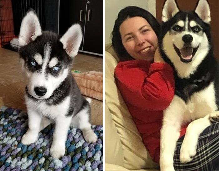 As pessoas estão compartilhando fotos lado a lado com seus animais para o Desafio de antes e agora 26