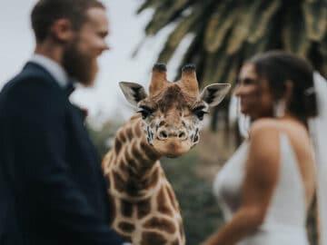 As 30 melhores fotos de casamentos de 2020 3