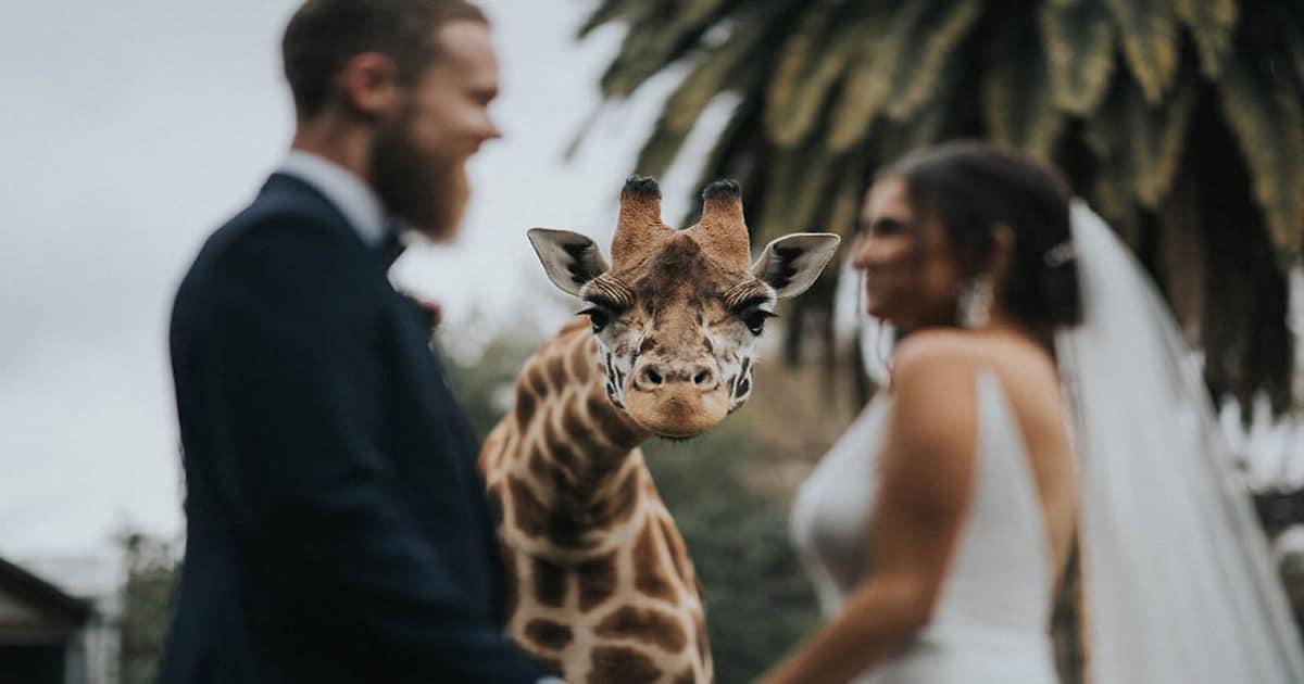 As 30 melhores fotos de casamentos de 2020 45