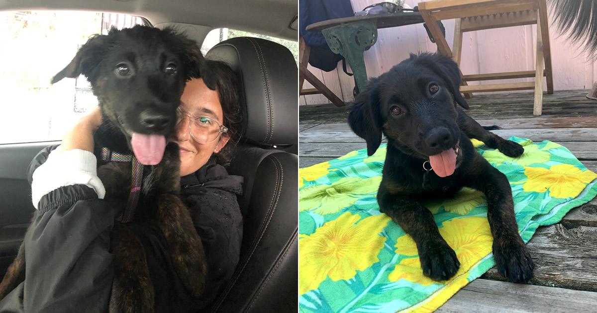 80 coisas que pensei durante o primeiro mês com minha cachorra 18
