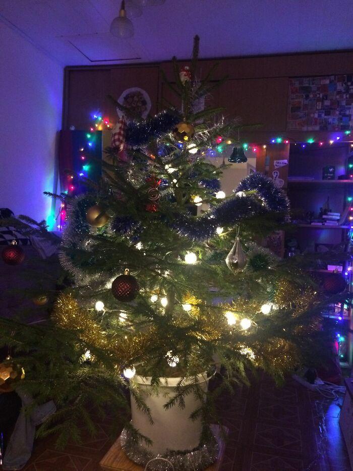 Ei, leitores, compartilhem sua árvore de Natal conosco 4