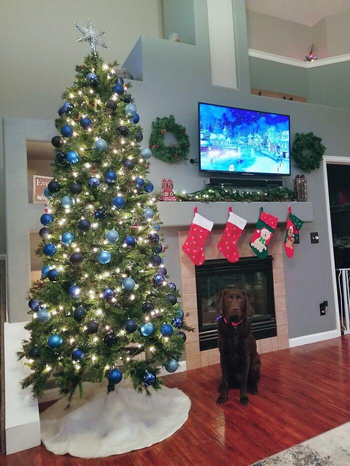 Ei, leitores, compartilhem sua árvore de Natal conosco 7