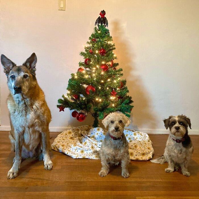 Ei, leitores, compartilhem sua árvore de Natal conosco 8