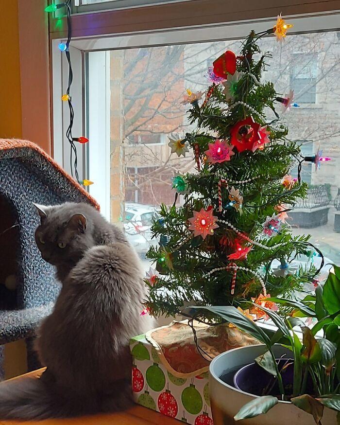 Ei, leitores, compartilhem sua árvore de Natal conosco 13