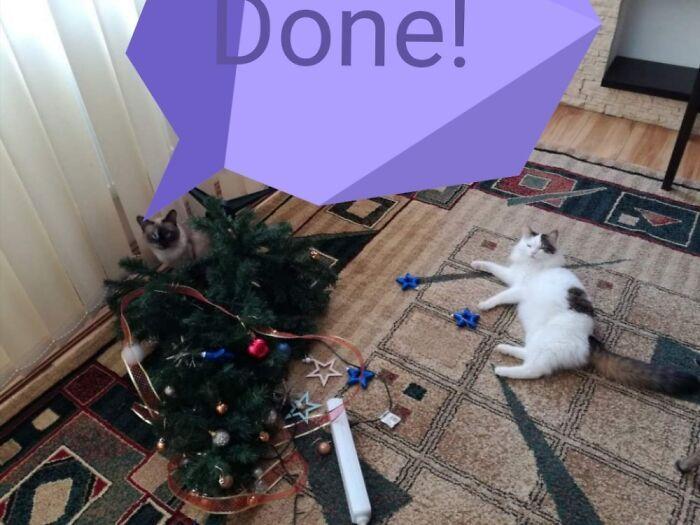 Ei, leitores, compartilhem sua árvore de Natal conosco 14