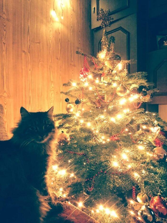 Ei, leitores, compartilhem sua árvore de Natal conosco 15