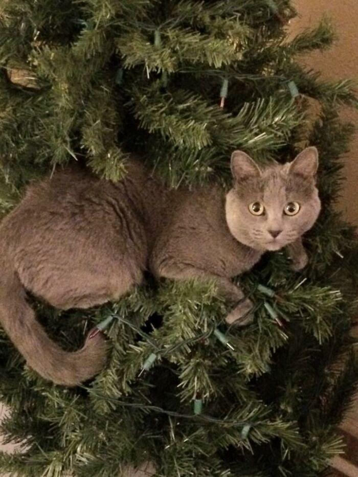 Ei, leitores, compartilhem sua árvore de Natal conosco 20