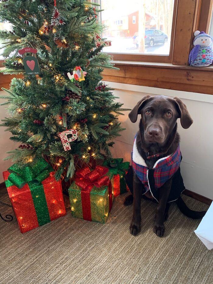 Ei, leitores, compartilhem sua árvore de Natal conosco 24