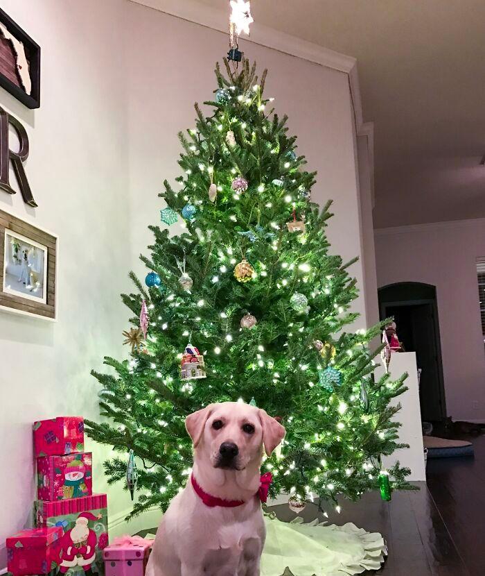 Ei, leitores, compartilhem sua árvore de Natal conosco 31