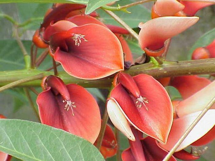 20 flores nacionais de diferentes países 3