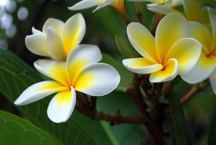 20 flores nacionais de diferentes países 5
