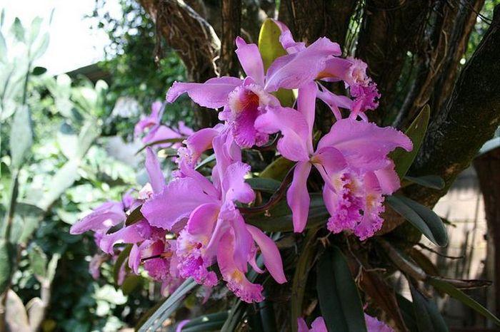 20 flores nacionais de diferentes países 8