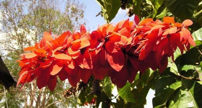 20 flores nacionais de diferentes países 9