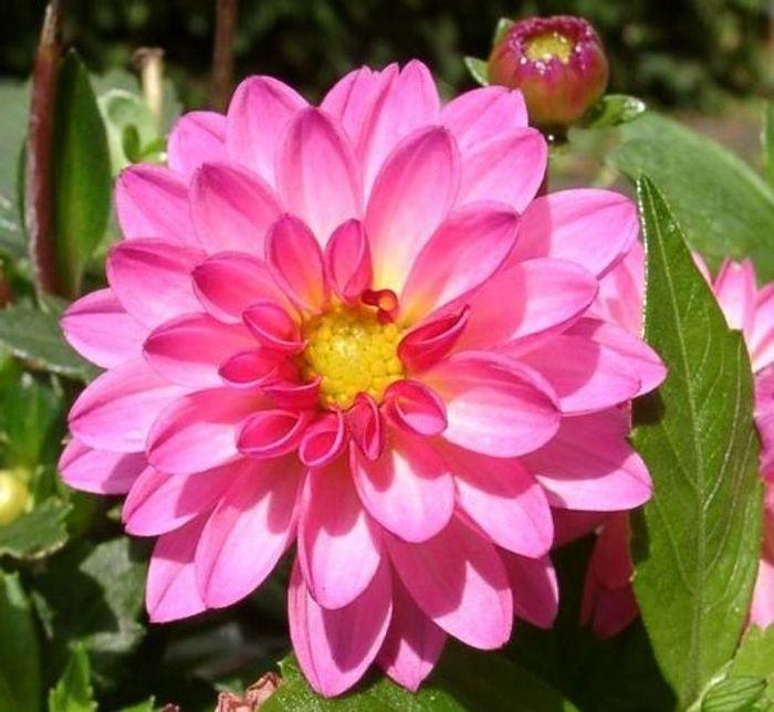 20 flores nacionais de diferentes países 15
