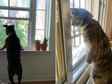 34 fotos de animais de estimação sendo vizinhos intrometidos 4
