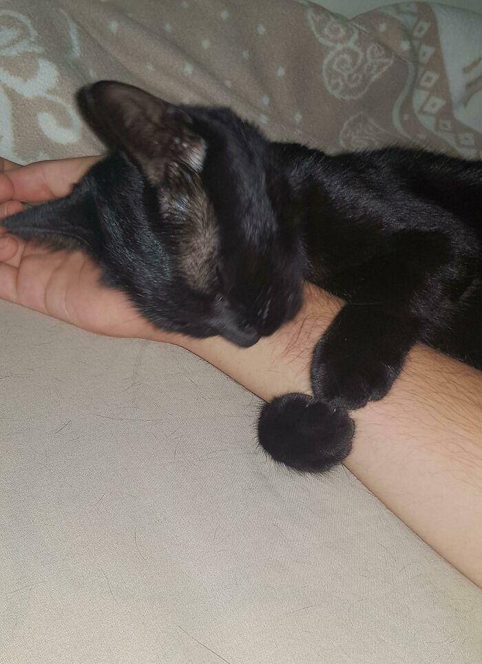 40 fotos de gatinhos dormindo 2