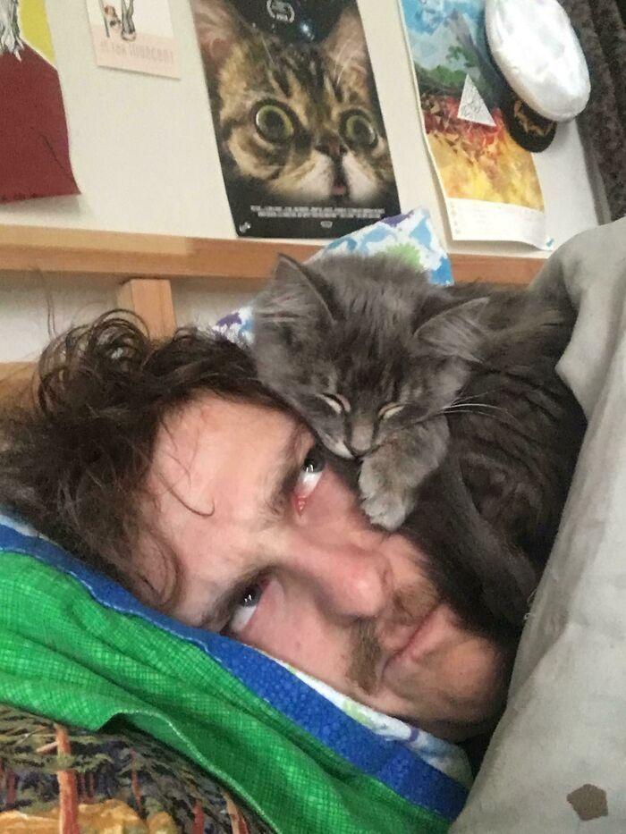 40 fotos de gatinhos dormindo 4
