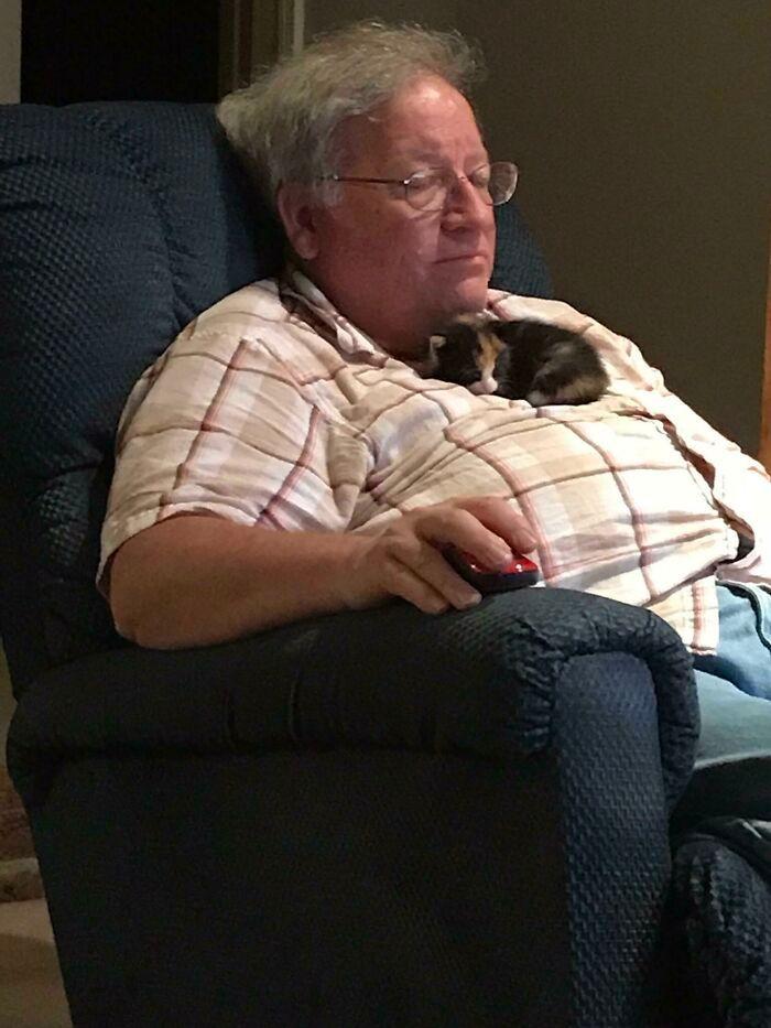 40 fotos de gatinhos dormindo 10