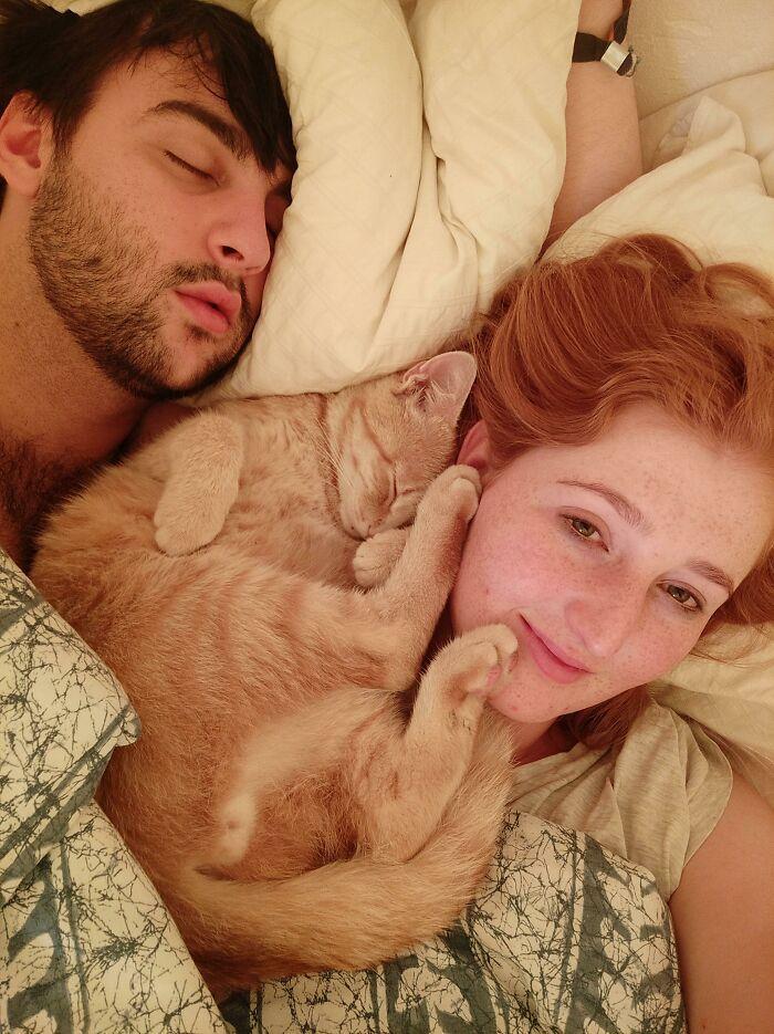 40 fotos de gatinhos dormindo 11